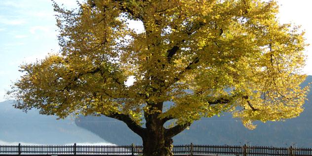Lebensbaum,© Pixelio / Delef Menzel