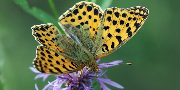 Schmetterling,© Pixelio / Luise